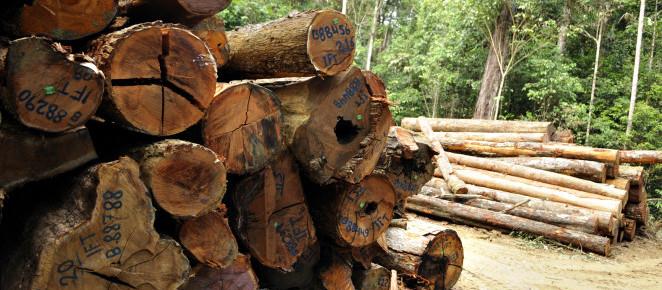 FSC® Brasil lança campanha em vídeo sobre consumo responsável da madeira