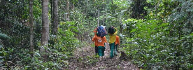 Ituxi é a quarta Resex da Amazônia a realizar o manejo florestal