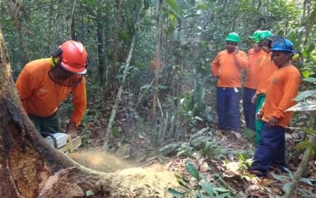 (Português do Brasil) Reserva Extrativista Ituxi realiza 2ª etapa da exploração florestal