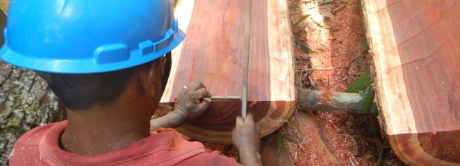 (Português do Brasil) Manejo Florestal Comunitário é alternativa sustentável à exploração madeireira em Lábrea (AM)