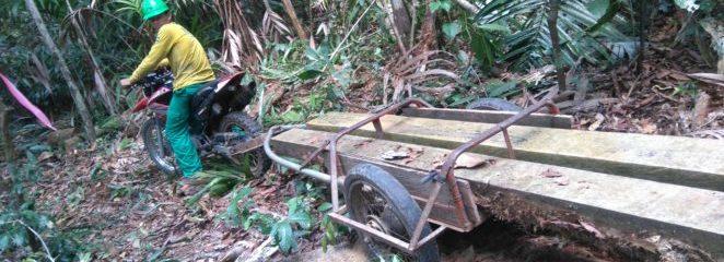 Uso de tecnologia diminui trabalho manual no transporte primário de pranchas de madeira no manejo florestal comunitário