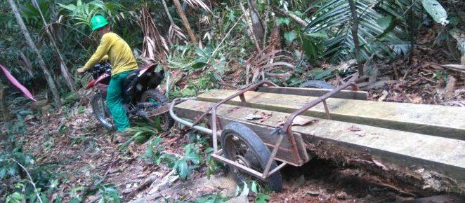 (Português do Brasil) Uso de tecnologia diminui trabalho manual no transporte primário de pranchas de madeira no manejo florestal comunitário