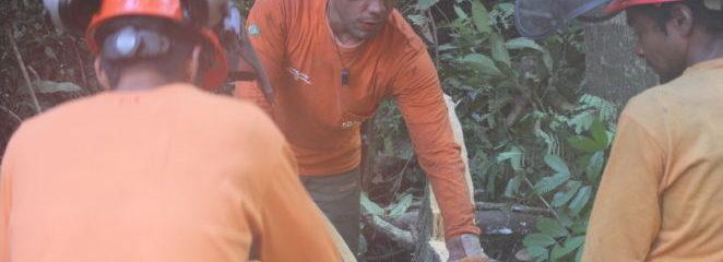Manejo florestal comunitário na Resex Verde para Sempre é objeto de pesquisa