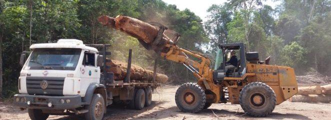 Colheita florestal na Resex Verde para Sempre avança