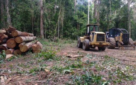 (Português do Brasil) Resultados do manejo florestal na Resex Verde para Sempre confirmam potencial madeireiro da região