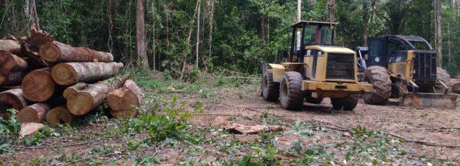 Resultados do manejo florestal na Resex Verde para Sempre confirmam potencial madeireiro da região