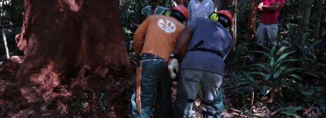 Programa de Capacitação e Treinamento do IFT fortalece manejo florestal comunitário na Amazônia