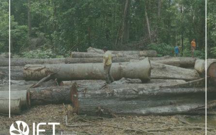 Terceira vistoria do TED (SFB) na Resex Verde para Sempre constata uso adequado de recursos para manejo florestal comunitário