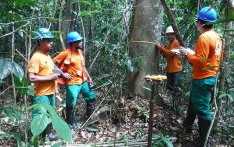 (Português do Brasil) IFT realiza Inventário Florestal na Floresta Nacional do Bom futuro, em Rondônia