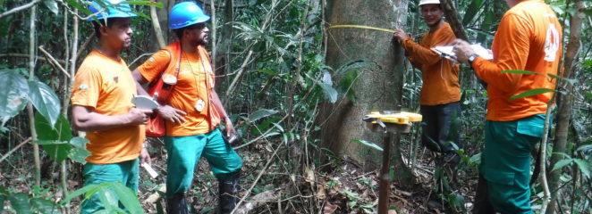 IFT realiza Inventário Florestal na Floresta Nacional do Bom futuro, em Rondônia